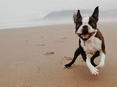 Beach Safety For Dogs - Three Million Dogs