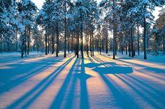 forest sunrise winter trees wallpaper background