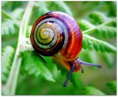 The colour of the snail is really unusual and stands out against the green leaves of it's surroundings. The texture of the shell and the snail itself is also made clear which adds to the unusualness.
