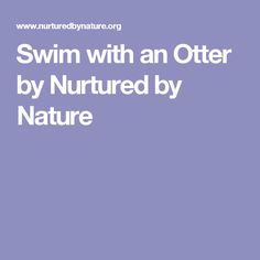 Swim with an Otter by Nurtured by Nature