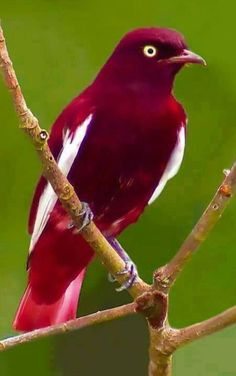 36 Super Ideas for colorful bird nature bluebirds Tropical Birds, Exotic Birds, Colorful Birds, Colorful Animals, Cute Birds, Pretty Birds, Funny Birds, Funny Animals, Beautiful Creatures