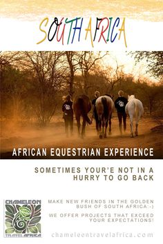 Imagine horses... Africa... wildlife... combine those and you have one amazing project! You will expand your knowledge about working with horses and improve your riding skills, as well as spend time in the bush acquiring knowledge about South African wildlife. Take the horses for a swim in the dam, go on a game drive to see lion and elephant, sit around the campfire and listen to the African night sounds…and sooo much more! #horse #horses #southafrica #riding #equestrian