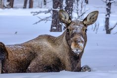 Mein Kurztrip nach Kiruna Lappland, Animals, Sled Dogs, Northen Lights, Adventure, Viajes, Animales, Animaux, Animal Memes