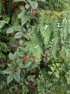 September 26th-green and berries