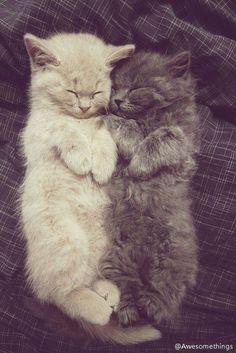 Sleeping Beauties #Kittens