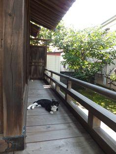 神社猫@大船