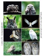 Free Owls Memory Match, lapbook, flipbooks, and other printables