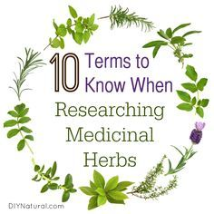 When researching medicinal herbs, one of the most important things to cover is the topic of terminology. It may sound boring, but it's very important and necessary!