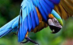 Costa Rica to Create Virtual Atlas of its Rich Biodiversity