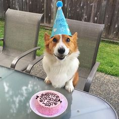 I turned 5 today 🎂