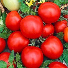 New Jersey tomatos