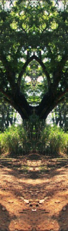 The mystery tree #aliens  #mistery  #portaldimensional #ufo