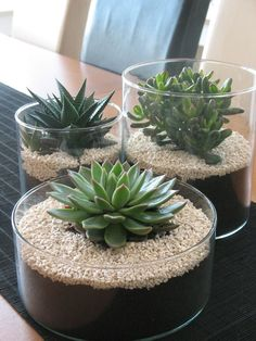 succulents mason jar, succulents centerpiece, succulents indoor, succulents in containers is part of Succulents indoor - Mason Jar Succulents, Succulent Centerpieces, Succulents In Containers, Cacti And Succulents, Planting Succulents, Planting Flowers, Propagate Succulents, Cactus Plants, Cactus Decor