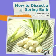 Spring has arrived and it's time to have some fun with hands-on activity that your kids are sure to enjoy! Steam Activities, Hands On Activities, Science Activities, Daffodil Bulbs, Bulb Flowers, Teaching Science, Student Learning, Science Valentines, Fun Stuff