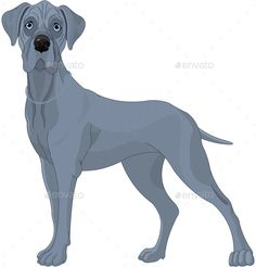 Illustration of a Great Danes dog. EPS 8 (editable), JPG (high resolution)