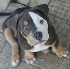 Those eyes beautiful