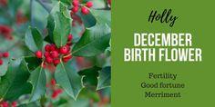 December Birth Flower holy December Birth Flower, Birth Month Flowers, Birth Symbols, Late Summer Flowers, Month Signs, Most Popular Flowers, December Birthday, Flower Meanings, Flowering Trees