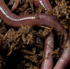 How To Start A Worm Farm For Fun Or Profit