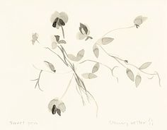 """Stacey Vetter, Sweet Pea, ink on paper, 10"""" x 8"""""""