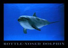 mystical-dolphins ♥