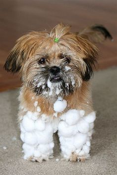 snow pants :) .... oh yea...my little dog   is one big snow ball too come winter ... too funny !