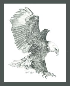 Bald Eagle Drawing - Bald Eagle In A Dive by Robert Wilson Bird Drawings, Animal Drawings, Drawing Sketches, Pencil Drawings, Drawings Of Eagles, Pencil Art, Dove Drawing, Eagle Drawing, Eagle Sketch