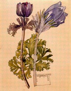 Charles Rennie Mackintosh, Anemone and Pasque, 1915