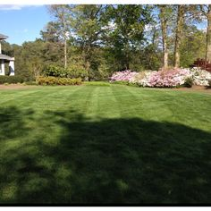 One of my properties-  Stripes? Oh yeah- Always! You Must Stripe When You Cut!