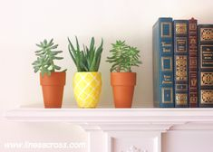 Level of Care: Easy Light/Water: Aloe loves the sun. Water once a week, allowing to soil to dry out completely in between. Display Idea: Paint a rounded pot like a pineapple, then transplant the aloe, like Lines Across.