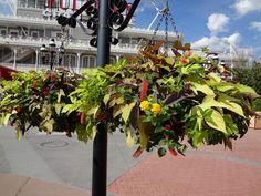 Hanging basket ideas!
