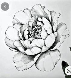 Peony Flower Tattoos, Peonies Tattoo, Flower Tattoo Drawings, Tattoo Design Drawings, Floral Tattoo Design, Flower Tattoo Designs, Peony Drawing, Sketch Drawing, Mago Tattoo