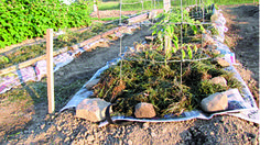 Heavily mulched, no-weed gardening saves time, labor, and water.