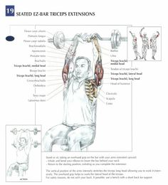 Seated Ez-Bar Triceps Extensions ♦ #health #fitness #exercises #diagrams #body #muscles #gym #bodybuilding #arms
