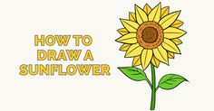 How to Draw a Sunflower: Easy and Simple Guide