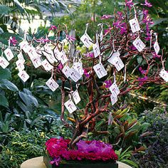Wedding, Tree, Manzanita, Wish, Message - Manzanita Message Wish Tree