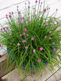 """Edible Landscaping: Container Garden - Chives 