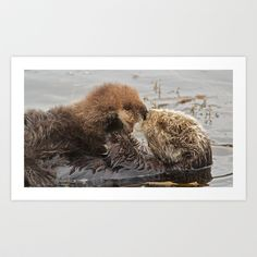 Sea Otter Mom and Pup  Art Print by Ooh! Look! Photography  - $30.00 Otter Love, Sea Otter, Brown Bear, Otters, Pup, Art Prints, Photography, Animals, Art Impressions