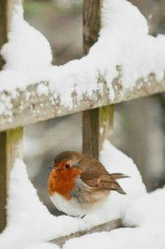 Cute Birds, Pretty Birds, Beautiful Birds, Animals Beautiful, Funny Birds, Hirsch Illustration, The Animals, Nature Animals, Baby Animals