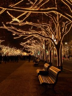 lights Under The Linden in Berlin looks amazing during winter! Travel across Europe and discover 31 countries by train with Eurail. Enjoy the best rail travel experience in Europe with our Eurail Pass! Tree Lighting, Outdoor Lighting, Outdoor Christmas, Christmas Lights, Christmas Tree, Landscape Lighting, Light Art, The Places Youll Go, Landscape Design