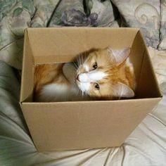 ogpizzaking:  I think FedEx got the wrong house…