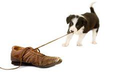Na psim tropie: Zachowanie psów
