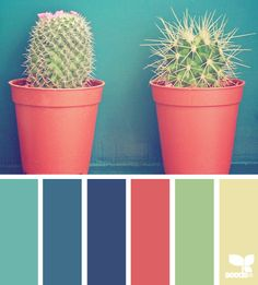 cacti color - design seeds - like the blues, and the watermelon-y color-- my favorite color pallet yet! Color Scheme Design, Colour Pallette, Color Palate, Colour Schemes, Color Combos, Color Patterns, Stoff Design, Displays, Colour Board