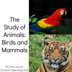 The Study of Animals Part 8: Birds and Mammals with FREE printables! - Enchanted Homeschooling Mom