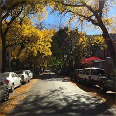 Beautiful fall colors with sunny street #Chicago #Urban #Street #Fall #Autumn #Colors #HappyNovember #HappyWeekend