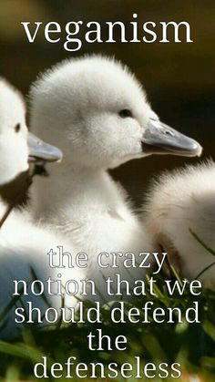 It's never crazy. They need someone to be their voice. People just assume those who are vegan or vegetarian are nuts. Vegan Facts, Vegan Memes, Vegan Quotes, Vegetarian Quotes, Swan Animal, Mon Combat, Reasons To Go Vegan, Why Vegan, Stop Animal Cruelty