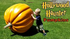 Hagrid's Pumpkin Patch HARRY POTTER INSPIRED! Large Halloween Pumpkins!