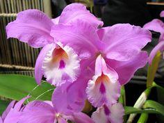 Il significato e la simbologia dei fiori