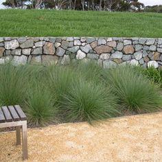 Detailed description of the Tussock Grass (Poa labillardieri) 'Eskdale' cultivar/variety. House Landscape, Landscape Design, Garden Design, Coastal Gardens, Small Gardens, Australian Native Garden, Front Yard Design, Garden Fencing, Garden Floor
