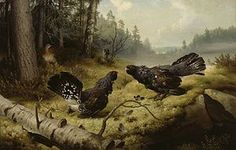 Ferdinand von Wright: The Fighting Capercaillies, 1886. #Ateneum Art Museum. The painting ranks very high among Finland's most popular items. It is probably the most copied work of art in Finland.