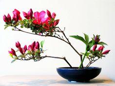 ikebana-2004-desiree-castelijn-beautiful.jpg (996×747)